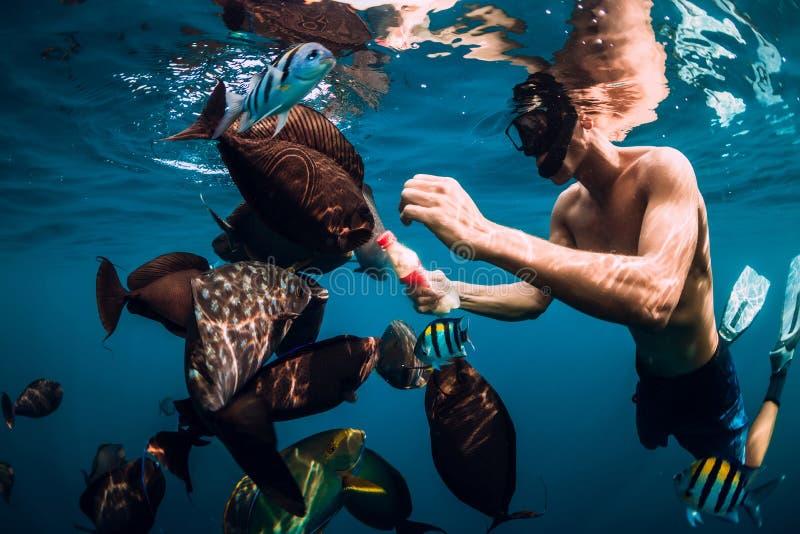 Freediver-Mannschwimmen und Fütterungsfischschwarm im Meer stockfoto