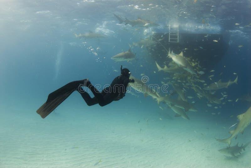 Freediver wijd met Boot en Citroenen stock fotografie