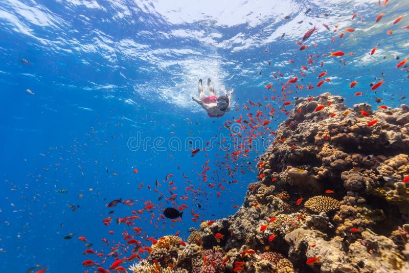 Freediver woman exploring coral stock image