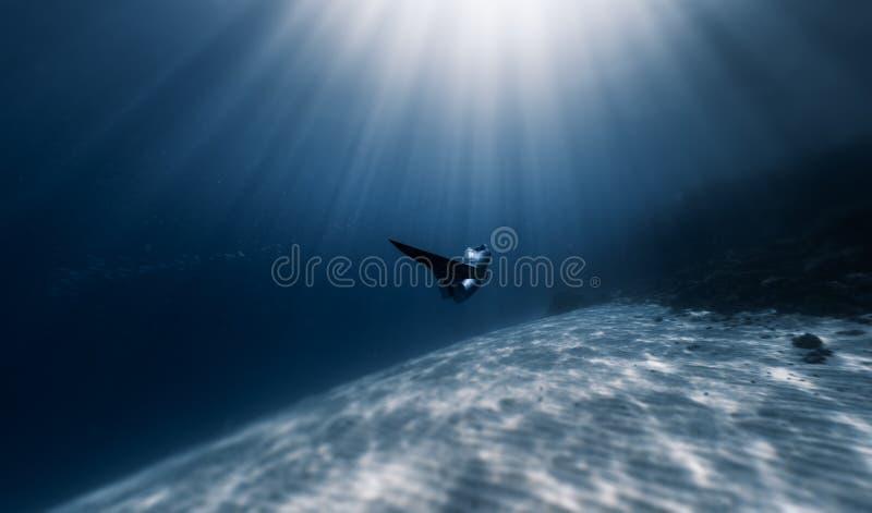 Freediving 免版税库存图片