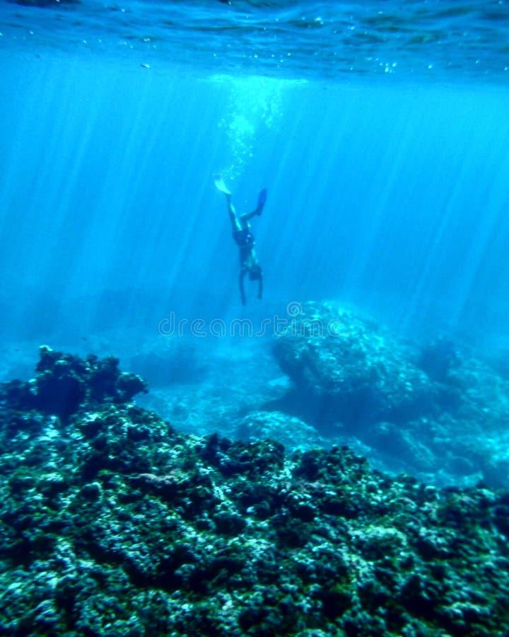Freediving fotografia royalty free
