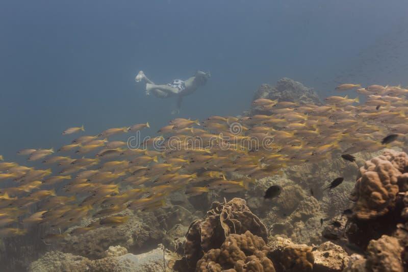 Freedivng bij Kood-eiland royalty-vrije stock foto's