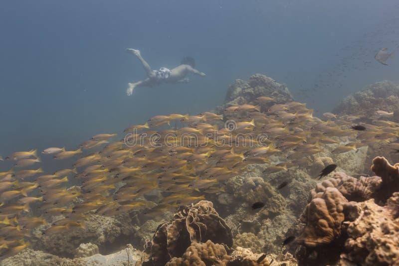 Freedivng bij Kood-eiland stock afbeeldingen