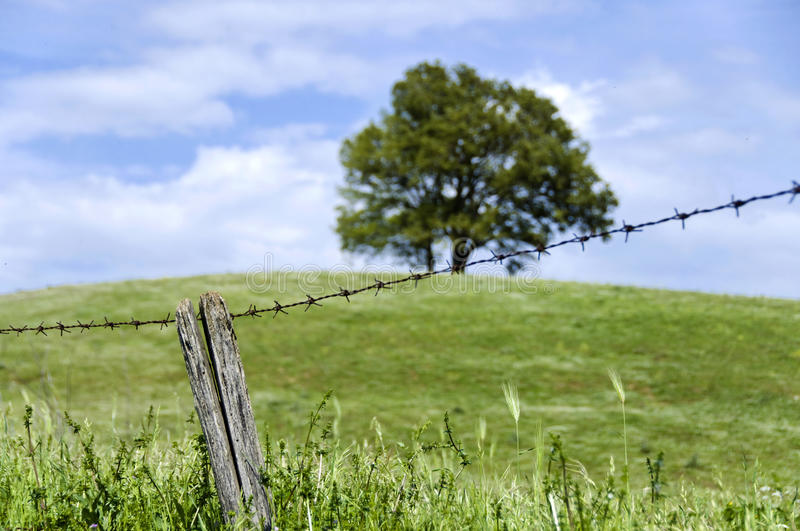 Download Freedom stock photo. Image of countryside, agriculture - 14045356