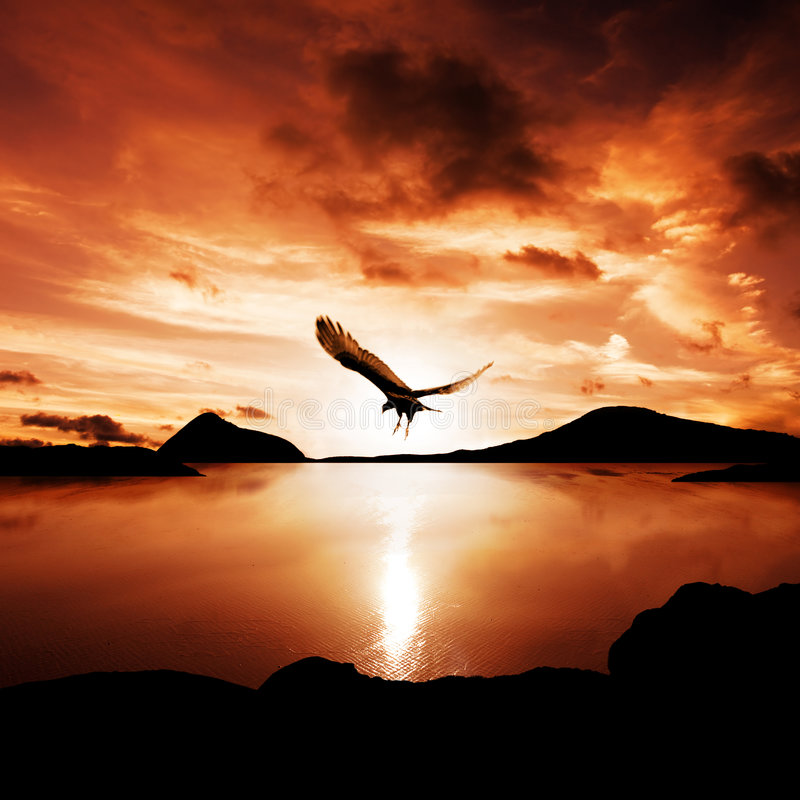 Download Freedom 2 stock image. Image of calm, eagle, christianity - 8091565