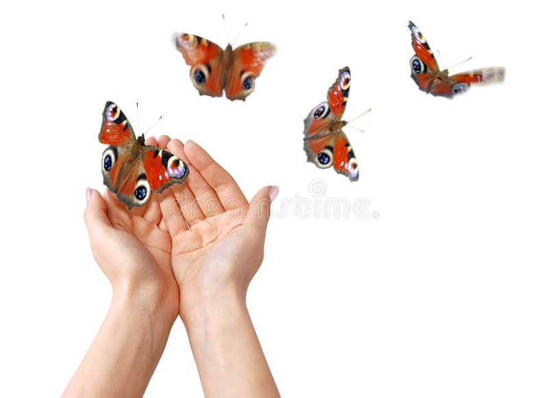 Freedom. Hands with butterflies on white background