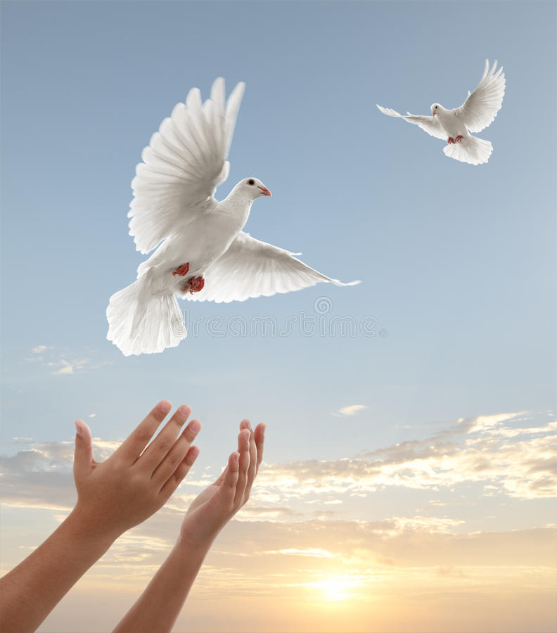 Freedom. Pair of hands releasing white doves during sunset