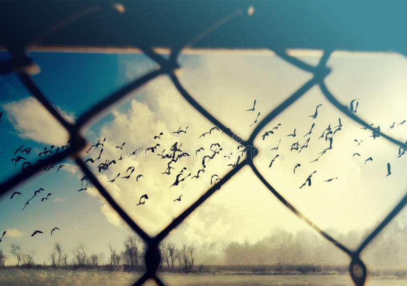 Freedom concept. Birds flying behind a steel wire mesh. Freedom concept. Birds behind a steel wire mesh royalty free stock images