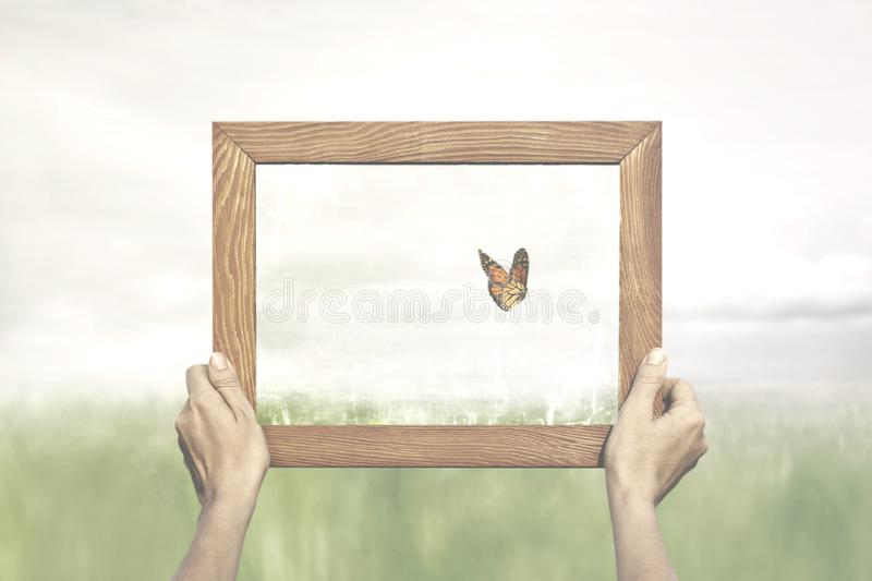 Freedom concept of a butterfly escaping from an expert collector. In the middle of the nature royalty free stock image