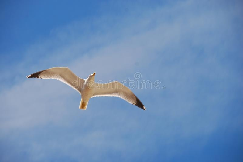 Freedom with fly stock photo