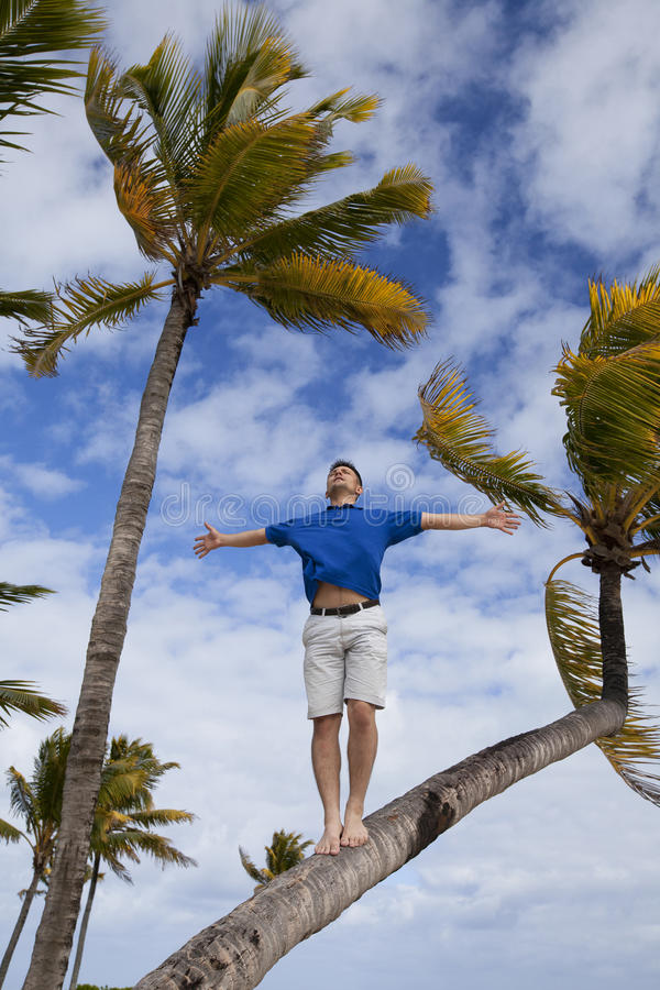 Freedom. A man stands on Palme, enjoying the wind of freedom stock images