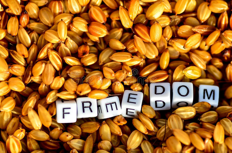 Freedom on organic rice grains. Rice grain with freedom alphabet cubes royalty free stock image