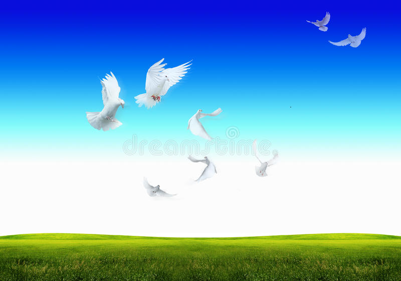 Download Freedom and Peace stock image. Image of flying, clouds - 26802527