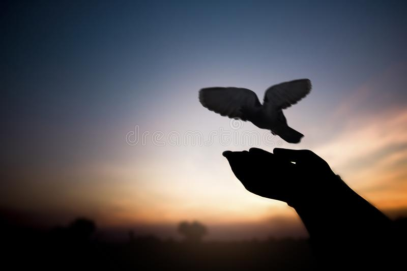 Freedom and peace concept, silhouette of hand release bird stock photos