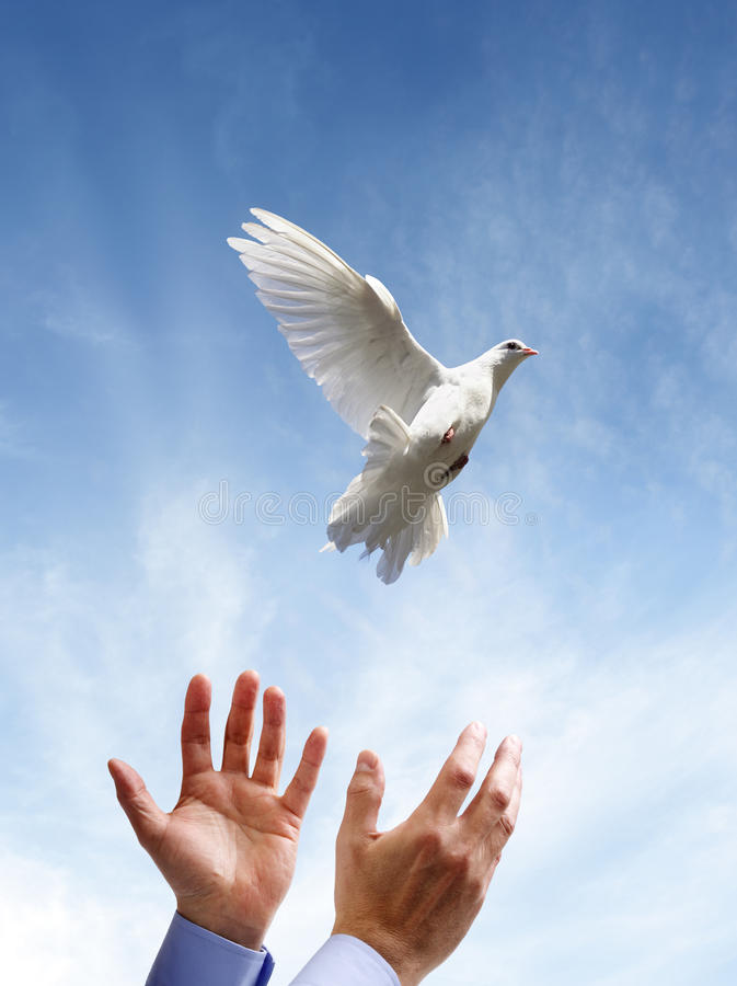 Freedom, peace and spirituality. Releasing a white dove into the air concept for freedom, peace and spirituality stock photography
