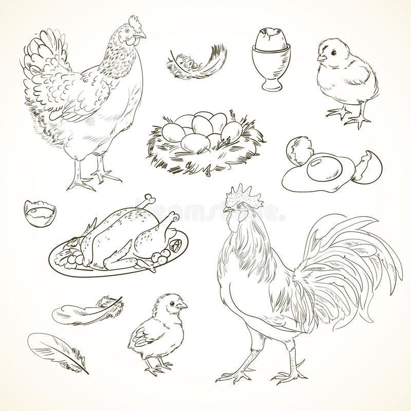 Freehand drawing chicken items vector illustration