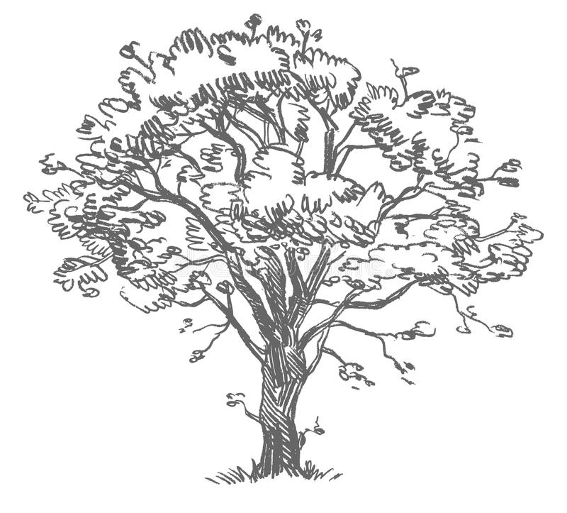 Freehand drawing tree royalty free illustration