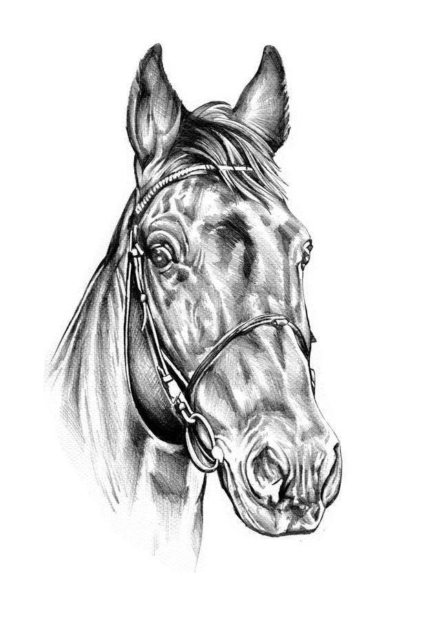 Freehand końskiej głowy ołówkowy rysunek royalty ilustracja