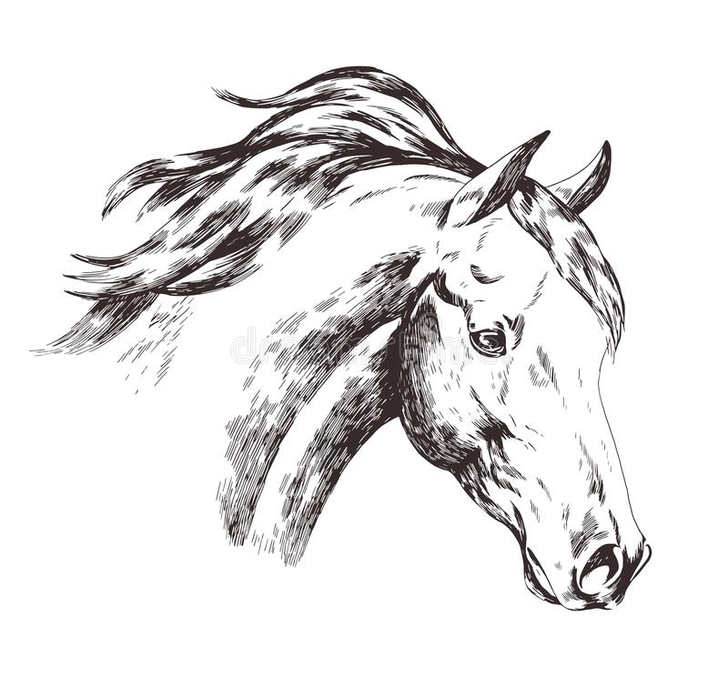 Freehand sketch of horse head isolated on white background. Realistic drawing of face of gorgeous farm domestic animal royalty free illustration