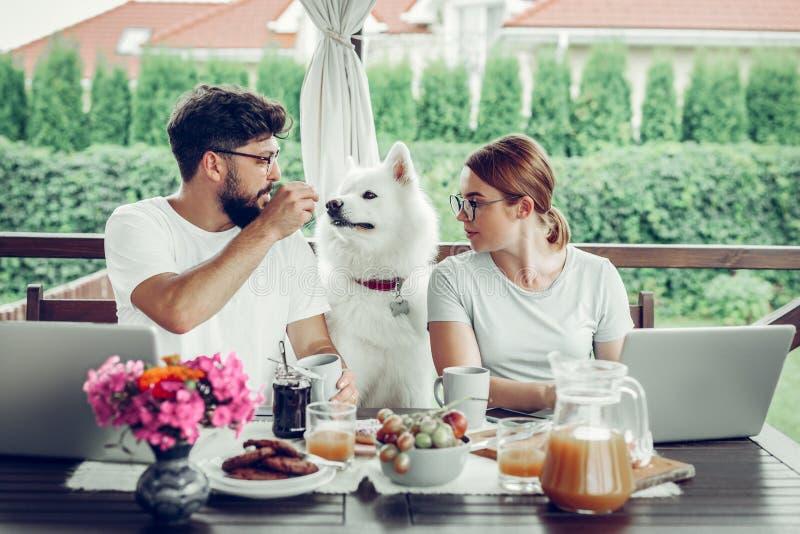 Freelancers concentrados que trabajan remotamente al aire libre y que alimentan su perro foto de archivo