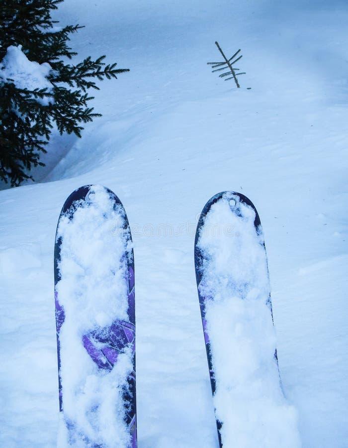 Freeride die in het bos ski?en royalty-vrije stock afbeeldingen