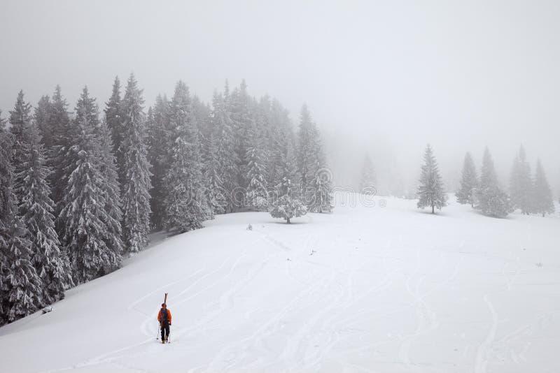 Freerider ga op sneeuw off-piste helling uit in bevroren spar bosverstand stock afbeeldingen
