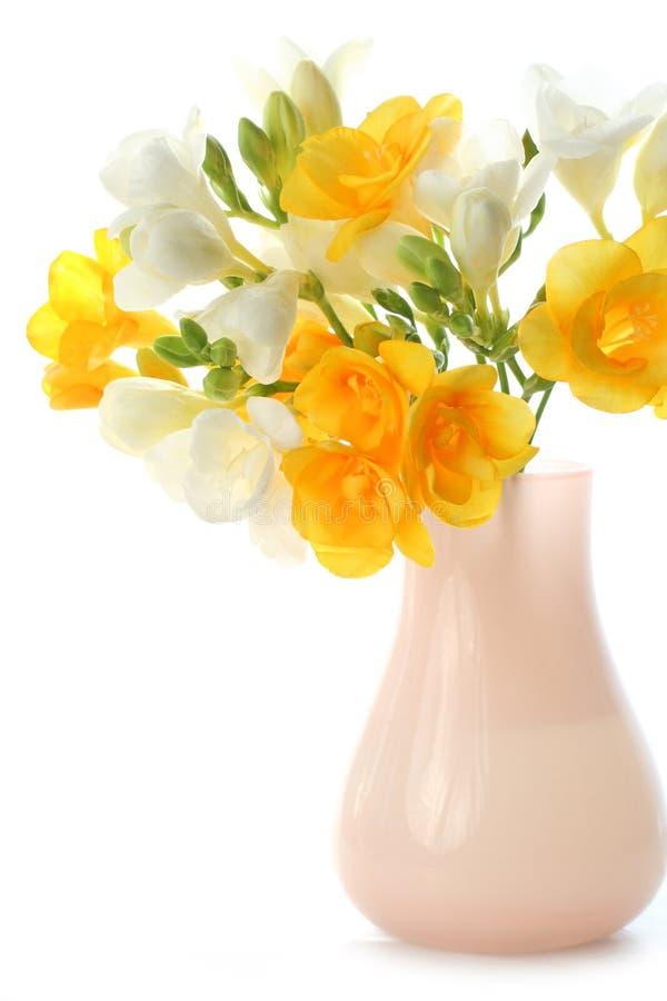 Freesia amarelo e branco imagem de stock