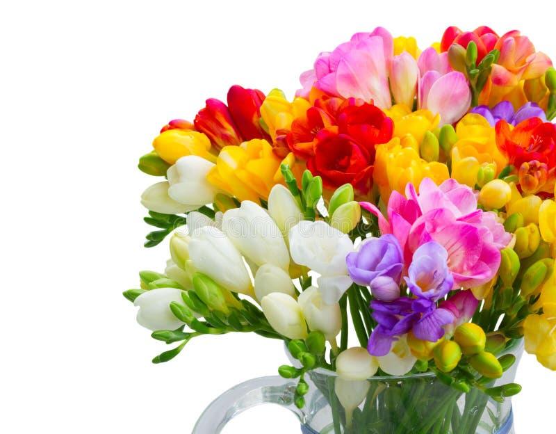 Freesia blommar på vit royaltyfri fotografi