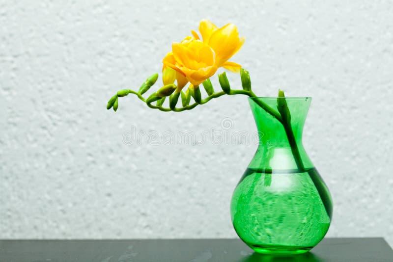 Freesia jaune dans le vase vert photographie stock