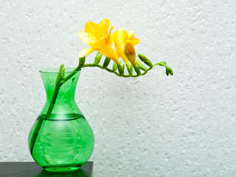 Freesia jaune dans le vase vert images stock