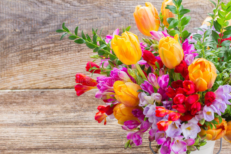 Freesia och blommor arkivfoton