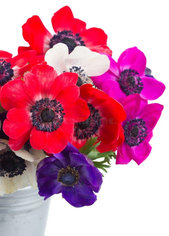 Freesia och blommor arkivbild