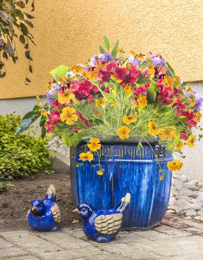 Freesiablommor i blåttkruka i trädgård royaltyfri foto