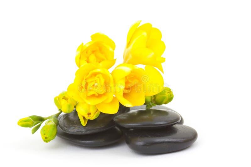 freesiamassagen stenar yellow royaltyfri foto