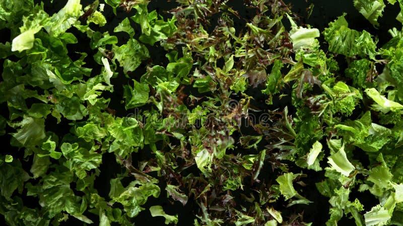 Freeze motion of flying fresh lettuce mix royalty free stock photos