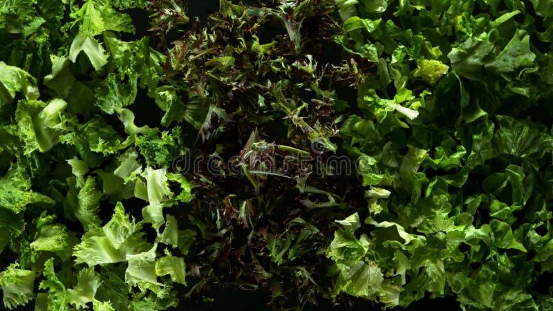 Freeze motion of flying fresh lettuce mix stock photos