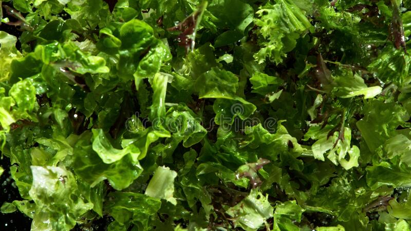 Freeze motion of flying fresh lettuce mix royalty free stock images