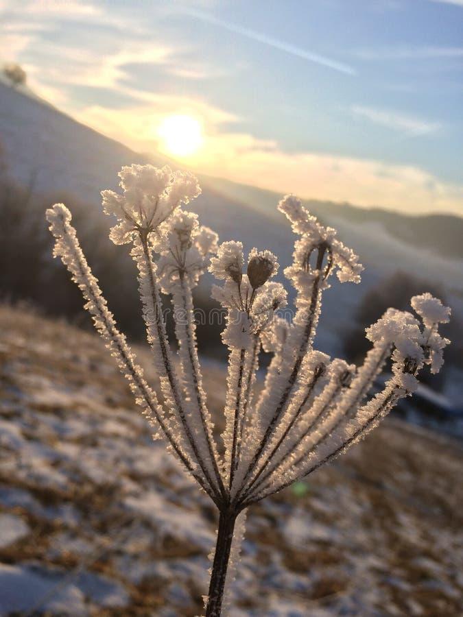 freezing royalty-vrije stock fotografie
