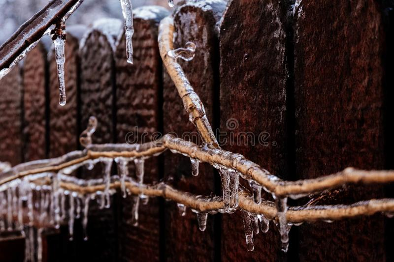 Freezing rain hitting the nature. icicles on tree branches. covered in ice. stock image