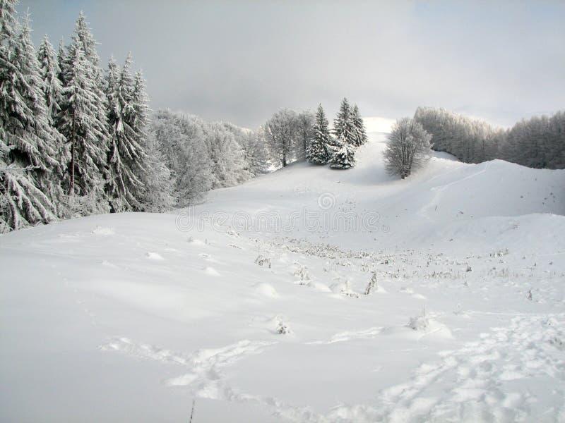 Freezing winter royalty free stock photos