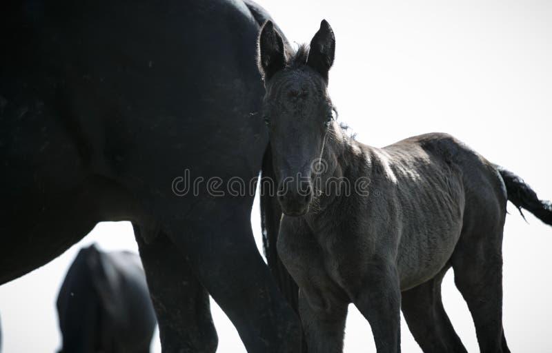 Freie Pferde lizenzfreie stockbilder