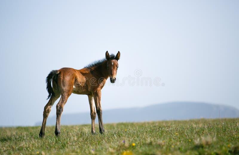 Freie Pferde lizenzfreies stockbild