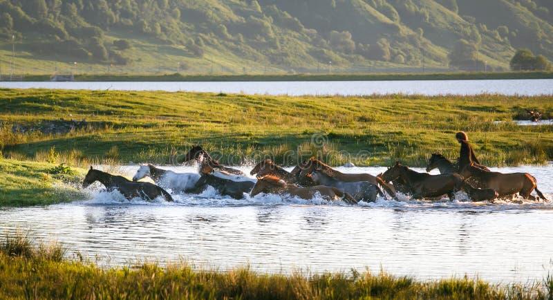 Freie Pferde lizenzfreies stockfoto
