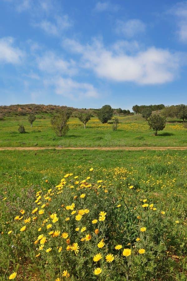 Freier Frühlingstag. Der landwirtschaftliche Fußweg lizenzfreie stockbilder