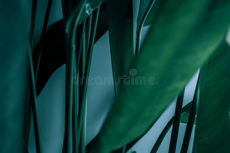Freier Raum für Werbeschild oder Einladung Grünbuchkartenanmerkung stockfoto