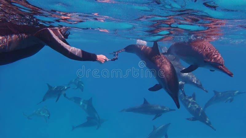 Freier Taucher des Mannes, der Gruppe schöne Delphine nahe schwimmen zu ihm gefangennimmt lizenzfreie stockfotos