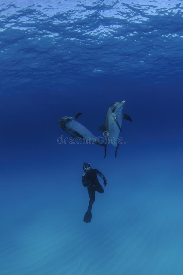 Freier Taucher unter zwei freundlichen Delphinen im klaren blauen Wasser von Bahamas stockfotos