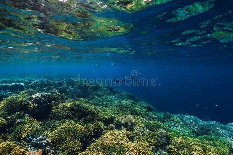 Freies Tauchertauchen im Ozean, Unterwasseransicht mit Felsen stockbilder