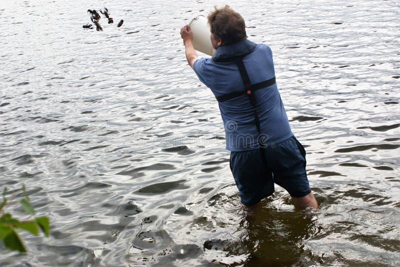 Freigeben von unter Normalgröße liegenden Krabben zurück zu dem Wasser lizenzfreies stockfoto