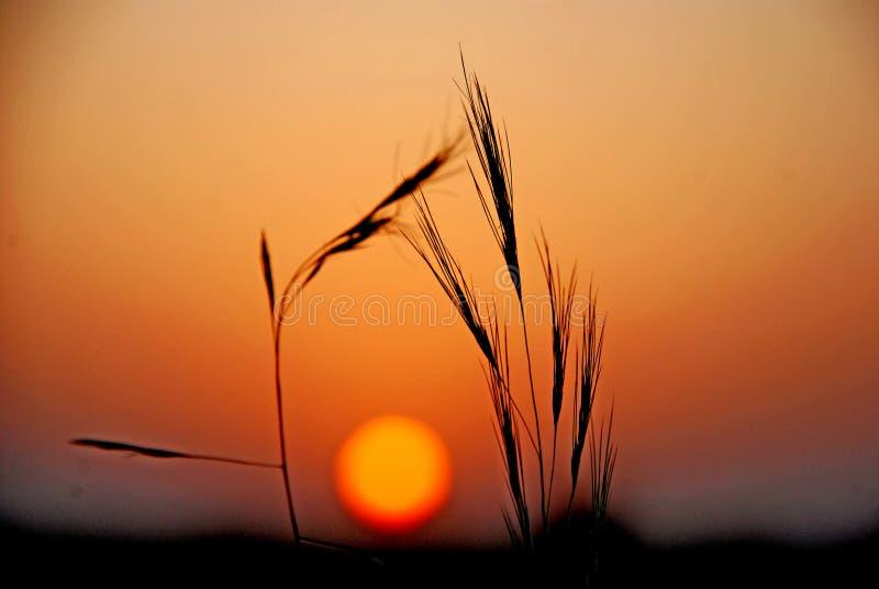 Freigebige klare farbige Natur in Abend Wüste lizenzfreie stockfotografie